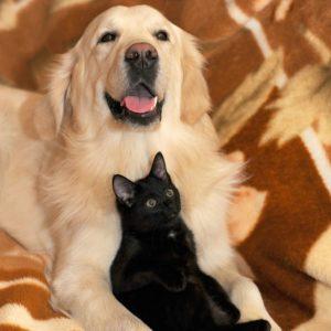 pet health reiki dog and cat