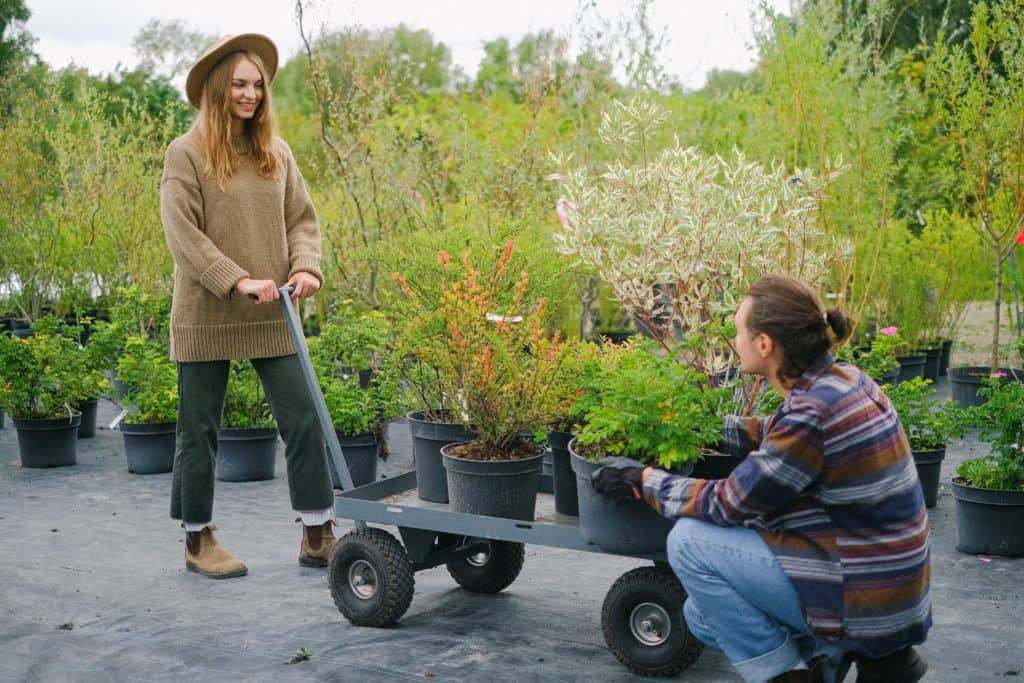 Capricorn-Man-and-Aries-Woman: couple working together in a garden